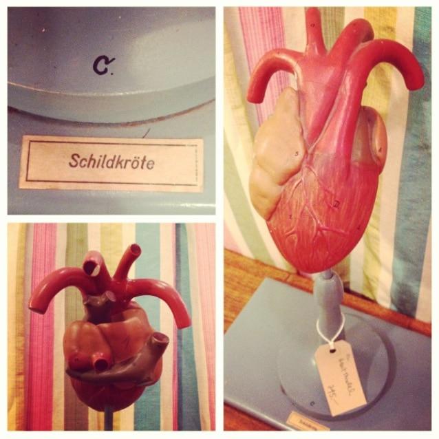 vintage-anatomical-model-heart